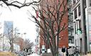 1番出口を出て、桜通りを左手にしてそのまま直進します。<br />横断歩道を2つ越えると右手に名古屋桜通ビルがあります。